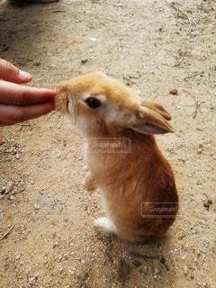 小動物を抱く手の写真・画像素材[2838694]