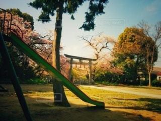 春の神社の写真・画像素材[2856576]