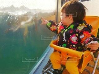 ペンギンの水槽の前の1歳男児の写真・画像素材[2960447]