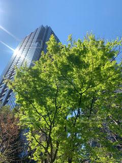 高層ビル街のオアシス緑地の写真・画像素材[2419579]