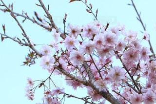 木の枝に止まっている鳥の写真・画像素材[3034630]