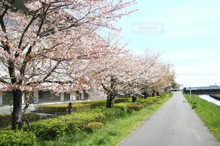 道路の脇に木がある道の写真・画像素材[3082098]
