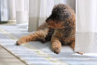 ベッドの上に座っている大きな茶色のテディベアの写真・画像素材[3105202]
