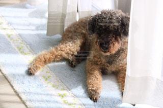 犬のクローズアップの写真・画像素材[3105203]