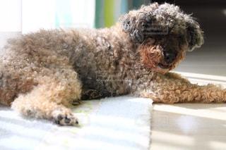 ベッドに座っている犬の写真・画像素材[3105204]