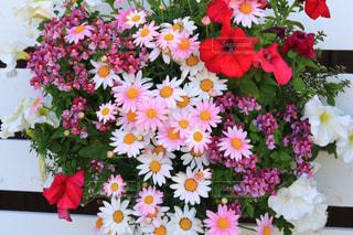 紫色の花で満たされた白い花瓶の写真・画像素材[3117341]