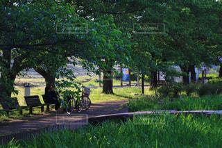 木の隣にあるベンチの写真・画像素材[3158271]