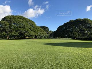 モアナルア庭園を背景に背景に木々が植わった大きな緑の畑の写真・画像素材[3158276]