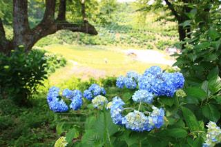 花園のクローズアップの写真・画像素材[3301293]
