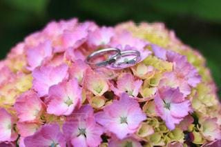 花のクローズアップの写真・画像素材[3380147]