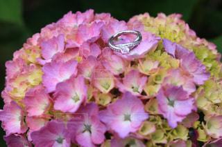 花のクローズアップの写真・画像素材[3380148]