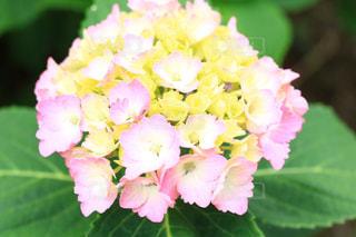 花のクローズアップの写真・画像素材[3380150]