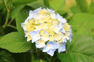花のクローズアップの写真・画像素材[3380151]