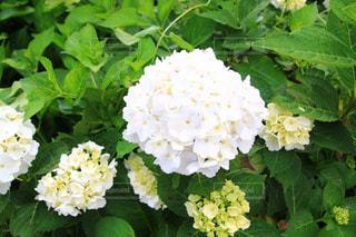 花のクローズアップの写真・画像素材[3380149]