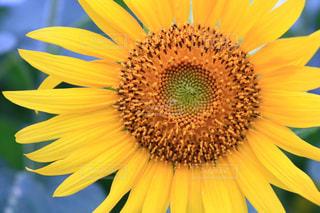花のクローズアップの写真・画像素材[3498402]