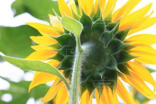 花のクローズアップの写真・画像素材[3498404]