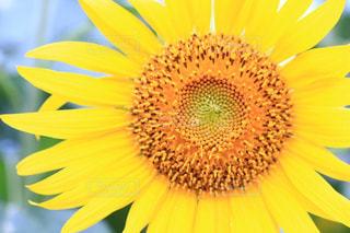 花のクローズアップの写真・画像素材[3498405]