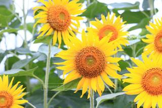 花のクローズアップの写真・画像素材[3498407]