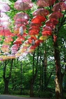森の中の大きな木の写真・画像素材[4566953]