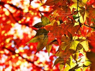 カラフルな紅葉🍁の写真・画像素材[2495733]