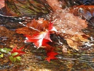 水面に映える一枚の紅葉🍁の写真・画像素材[2511430]