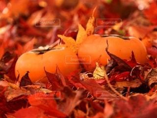 柿と落ち葉🍂の写真・画像素材[2562922]