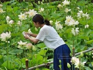 蓮を撮影する女の子の写真・画像素材[2621454]