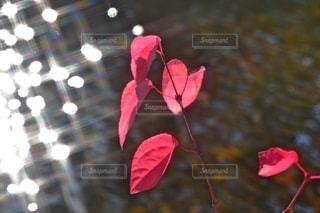 煌びやかな紅一点の写真・画像素材[2635748]