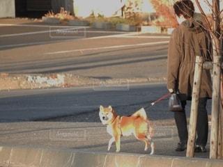 リードで犬を歩く人の写真・画像素材[2726725]