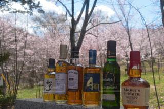 屋外,神社,樹木,ボトル,ビール,ドリンク,アルコール,アンバサダー,桜公園,カメラが好き,ちょっとしたご褒美,ハーフボトル,ウィスキーが好きでしょ,写真の世界