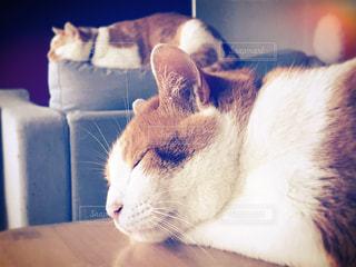 猫,動物,屋内,かわいい,レトロ,眠る,フィルム,茶トラ,フィルム写真,フィルムフォト