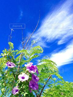 青空と紫色の花の写真・画像素材[2420897]