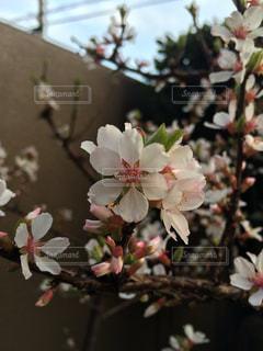 花,春,草木,ブルーム,ブロッサム,フローラ