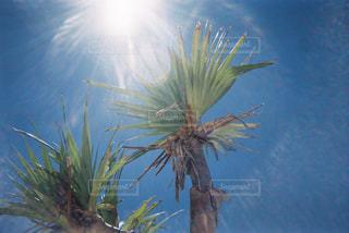 夏,ヤシの木,フィルム,写ルンです,フィルム写真,フィルムフォト