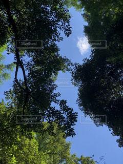 木のクローズアップの写真・画像素材[2428034]