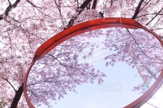 春のカーブミラーの写真・画像素材[2648762]