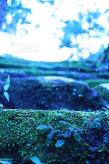 苔の階段の写真・画像素材[2739664]