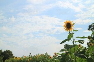 夏の花の写真・画像素材[3513340]