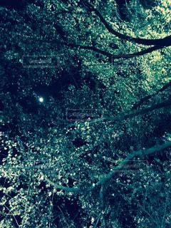 フィルム,フィルム写真,フィルムフォト,桜 夜 月 夜桜