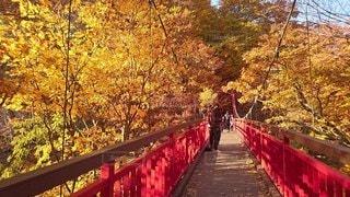風景,秋,橋,紅葉,屋外,樹木,草木