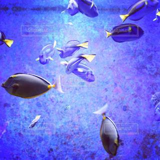 熱帯魚,青,黄色,水族館,フィルム,フィルム写真,フィルムフォト