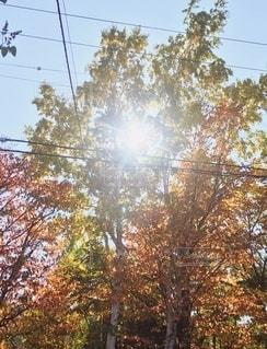 木と木の間の写真・画像素材[2624149]