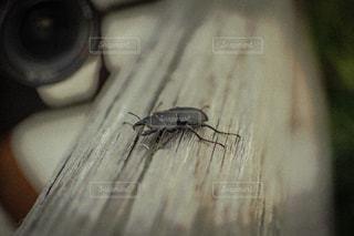 木,田舎,レトロ,虫,夏休み,フィルム,懐かしい,雰囲気,クワガタ,フィルム写真,コクワガタ,フィルムフォト