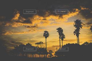 空,公園,夏,雲,夕焼け,オレンジ,木々,樹木,逆光,広場,ヤシの木,黄昏,フィルム,オレンジ色,夕焼け空,フィルム写真,夕焼,黄昏時,フィルムフォト,二色の浜,夕焼色