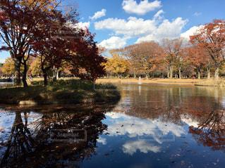 代々木公園、紅葉の写真・画像素材[2457471]