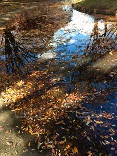 水の中の空の写真・画像素材[2478721]