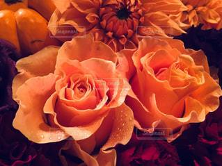 オレンジの花束。の写真・画像素材[2513298]