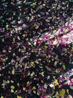 秋の写真・画像素材[2592259]