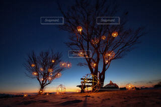 風景,空,夜,屋外,夕暮れ,樹木,明るい,草木,街路灯