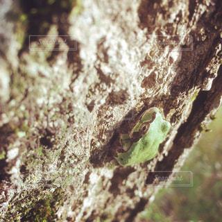 自然,レトロ,樹木,フィルム,カエル,フィルム写真,フィルムフォト